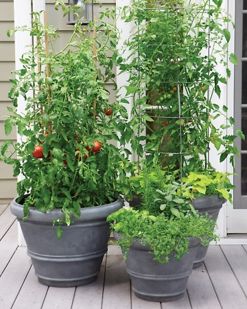 Large plants would need staking and bamboo can be easy option. You will increase space available space and will allow an under planting of small plants such as radish or herbs.
