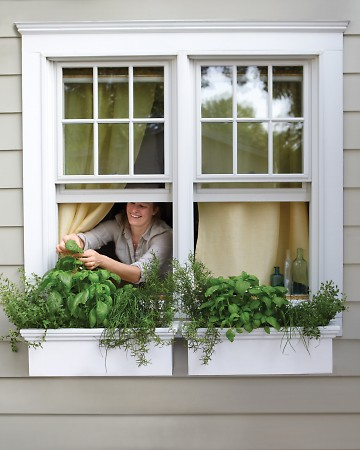 Window Boxes 10 Gardening Ideas for Small Spaces