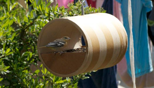 Diy bird feeders for How to build a bird stand