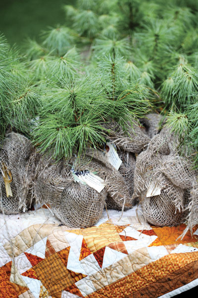 Party favors, early fall can be wonderful time of year to plant pine trees, give your guests a small seeding as a wedding favor.