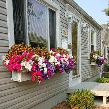 Window Boxes Ideas
