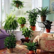 Indoor Gardening Ideas – 7 Houseplants that Add Oxygen to your Room