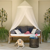 Daybed Designs, Ideas & Decor