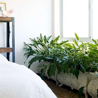 bedroom-plants-0110-l