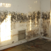 Mold: a dangerous enemy that must be removed