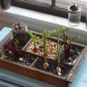 10 Indoor Garden Ideas for Small Spaces and How to make it happen!