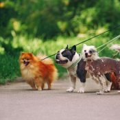 Top 10 Best Dog Walking Services