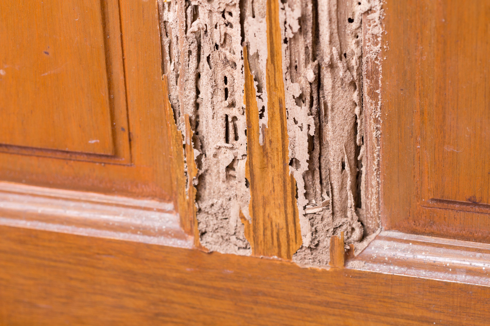 How To Tell If You Are Being Infested By Termites?
