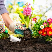 How to Breathe New Life into Your Garden