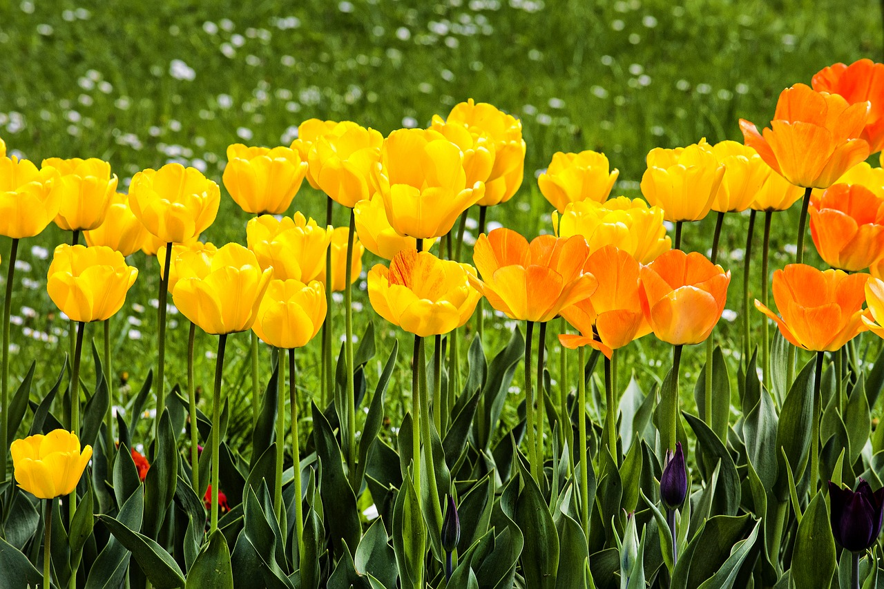 Top Tips for Getting Your Garden Ready for the Summer Months