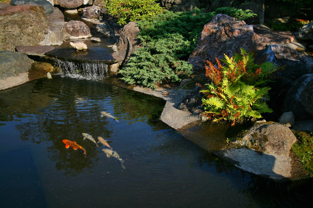 Pond Leak: How Much Evaporation Is Normal?