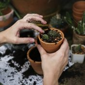 Importance of Winterizing Your Garden