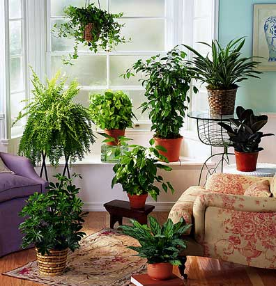 Indoor Gardening Ideas 7 Houseplants That Add Oxygen To