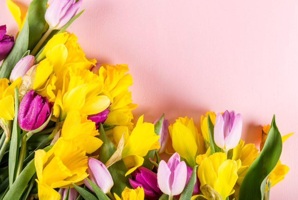 Daffodil-Thefabweb.com